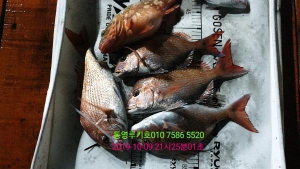 8babe4aa6da70bf200382dc782845340_mini.jp